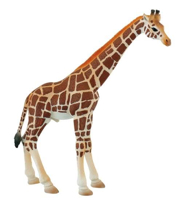 Imaginea Girafa mascul